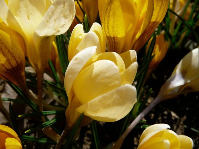 Frühlings-Tagundnachtgleiche
