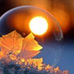 frozen-alive